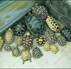 Baby Tortoise, Tortoise Care, Sea Turtle Art, Turtle Love, Cute Baby Turtles, Animals And Pets, Cute Animals, Beautiful Flowers Photos, Russian Tortoise
