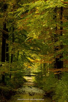 Love is blind, but friendship closes its eyes. World Pictures, Fall Pictures, Nature Pictures, Beautiful World, Beautiful Images, Four Seasons Painting, Places Around The World, Around The Worlds, Tree Forest