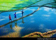 Play at paddy field: Photo by Photographer Rarindra Prakarsa