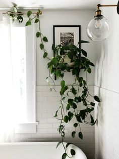 My Favorite Houseplants & Their Care
