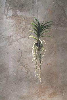 COLLECTED: LA MENAGERE City Guides, Plant Hanger, Plants, Collection, Home Decor, Decoration Home, Room Decor, Plant, Home Interior Design