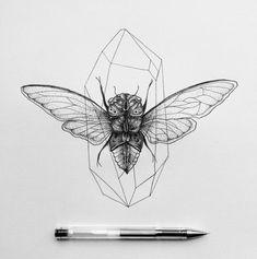 Cicada                                                                                                                                                                                 More