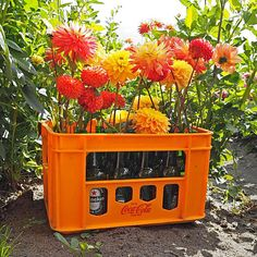 Hipaholic Blog   Lifestyle Blog met inspiratie over interieur, instagram en DIY: Bloemen Inspiratie bij Fam Flowerfarm #bloem #flowers #dahlia #color Gardening, Lifestyle, Winter, Floral, Creative, Flowers, Plants, Blog, Instagram