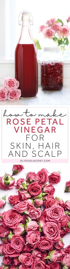DIY flower infusion — learn to make rose petal infused vinegar with apple cider vinegar and organic dried rose petals. This rose petal vinegar has a variety of therapeutic uses for skin, hair, and scalp care. It can aid in soothing ailments such as acne, rosacea, eczema, dermatitis, itching, irritation, sunburn, bug bites, hives, allergic reactions and more. Rose petal vinegar is astringent, anti-inflammatory, analgesic, antimicrobial, and antioxidant. Bottom photo © Nik_Merkulov / Adobe