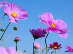 Fleurs de Bach : quels troubles peuvent-elles traiter ? - Femme ...