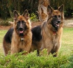 Dog Obedience Training for a Better Friend