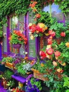 Hanging baskets - love the purple!