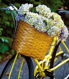 Bicycle basket filled with an abundance of beautiful hydrangea. Hortensia Hydrangea, Hydrangea Bloom, Hydrangeas, Bicycle Basket, Bike Baskets, Bicycle Art, Old Bikes, Vintage Bikes, Mellow Yellow