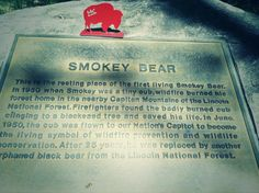 Lovely story and final resting place of the original Smokey Bear. Twitter / DSkaggsRyan