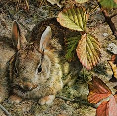"indigodreams: ""Carl Brenders 'A Young Generation' (detail) 1989 Acrylic painting "" Wildlife Paintings, Wildlife Art, Animal Paintings, Vida Animal, Illustration Art, Illustrations, Rabbit Art, Wild Rabbit, Bunny Art"