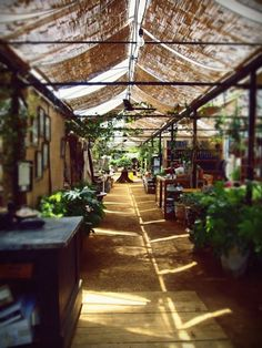 I would like to shop here for an afternoon, or steal their light diffusing idea; Petersham Nurseries