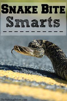Snake Bite Smarts for Wilderness Survival