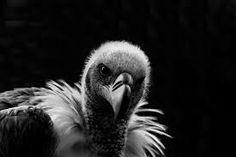 Imagini pentru black and white