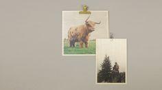 Plywood Print tulostaa valokuvia koivuvanerille