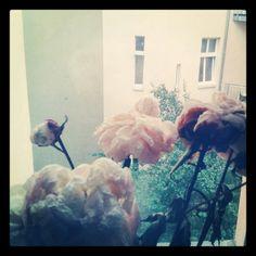 Berlin jury Virtual Flowers, Berlin, Tulle, Floral, Painting, Image, Art, Art Background, Tutu