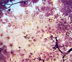 Inspiring image mother nature, mi pasión, flowers, spring, pink by Maria_D ❤❤