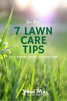 Keep your lawn looking great with these 7 Lawn Care Tips for a Greener, Thicker, Healthier Lawn. Weeds In Lawn, Lawn Care Tips, Green Lawn, News Blog, Healthy, Health