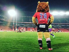 #Halftime the #Lions dominate the first half against the #Blues  19 - 0  #Lions4Life #LIOVBLU #SuperSport #SSRugby #SuperRugby