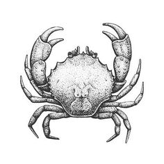 Illustration of Crab - Classic Drawn Ink Illustration Isolated on White Background vector art, clipart and stock vectors. Crab Illustration, Engraving Illustration, Ink Illustrations, Animal Sketches Easy, Alita Battle Angel Manga, Seashell Tattoos, Crab Tattoo, Crab Art, Cartoon Sea Animals