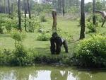 Pensacola Zoo