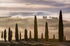 Tuscan Dream, Tuscany, Italy, Morning Fog, Tuscan Countryside, Belvedere, Val d'Orcia, Sunrise, Chap Cupressus Sempervirens, Cypress Trees, Tuscany Italy, Toscana, Nature Images, Landscape Photographers, Countryside, Scenery, Holiday Monday