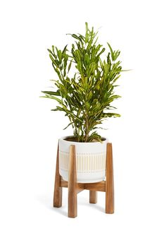 Wooden Plant Stand   HomeGoods