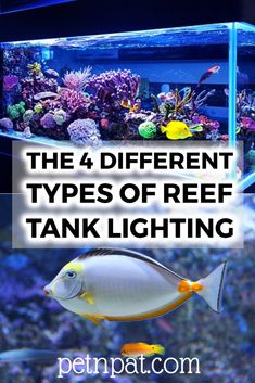 The 4 Different Types Of Reef Tank Lighting #fish #tank #fishtank #aquarium #pets #animals Animals For Kids, Animals And Pets, Farm Animals, Animal Quotes, Animal Memes, Aquarium Design, Aquarium Ideas, Aquarium Fish Tank, Aquarium Stand