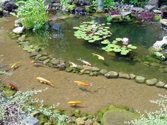 Sunken path into fishpond