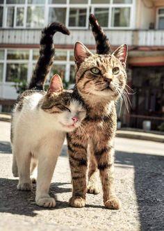 Handmade Personnalisé Anniversaire Chat Chaton carte mère ami fille Little Meow 1
