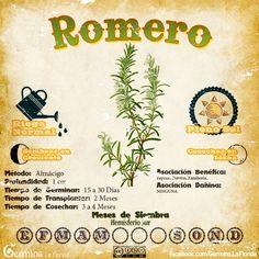 Romero2.jpg (700×700)