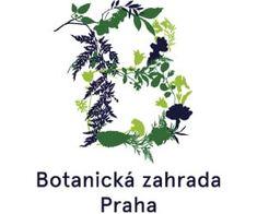 Rýmovníkový sirup s citrónem (recept) - více na Bylinkovo.cz Beauty, Syrup, Plants, Beauty Illustration