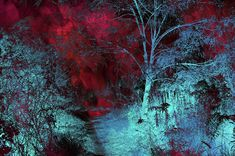 Burgundy Red MoonLight Metal Print by Jenny Rainbow. All metal prints are professionally printed, packaged, and shipped within 3 - 4 business days and delivered ready-to-hang on your wall. Choose from multiple sizes and mounting options. Framed Art, Framed Prints, Art Prints, Thing 1, Multiple Exposure, Landscape Prints, Fine Art Photography, Rainbow Photography, Landscape Photography