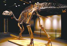 Hadrosaurus - Scheletul