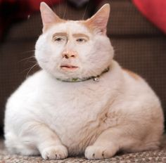 Nicolas cage is a mythical savior deriving from the womb of dog the bounty hunter. At the beginning of time dog the bounty hunter spread a bevy of stray cats into the world who all shared one thing in. Funny Baby Images, Funny Pictures For Kids, Funny Animal Pictures, Funny Kids, Funny Animals, Random Pictures, Animal Pics, Animal Memes, Adorable Animals
