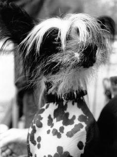DOG'S número 3 ©gloriagiménez