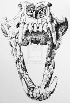 $100.00  Wolf or Dog Skull (stipple) by Sabrina-O.deviantart.com