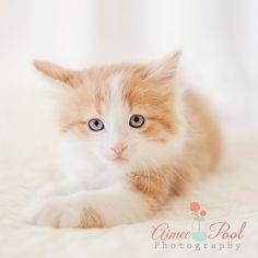 Pet Photography | Kitten