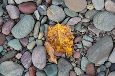 GNP, rocks and leaves