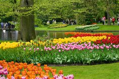 Tulip garden in keukenhof holland by BSKaran, via Flickr