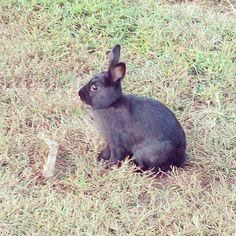 The rabbits in Helen were so trusting!  #animal #animals #nature #adorable #love #cute #wildlife #rabbit #wild #instagood #instalike #instamood #instadaily #photooftheday #picoftheday #igers #instalove #instacool #instapic #instaphoto #beautiful #bestoftheday #igdaily #bunny #bunnies #bunnylove #bunniesworldwide #instabunny #rabbits #fluffy