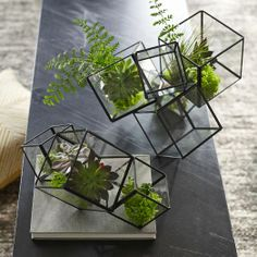 Cube Terrariums from West Elm. So cool!