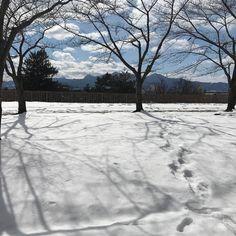 今年は雪をあまり見なかったなこれは盛岡#snow #morioka #iwate #japan #travel #travelgram
