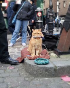 Meeting a Celeb: A Street Cat called Bob Now an international print success, Bob is a street cat that adopted a recovering drug addict and helped turn his life around.