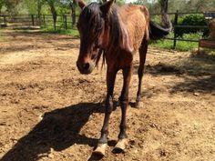 Le triste sort des chevaux dans les perreras Espagnoles - Galgos martyrs/ Lévriers sans frontières
