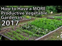 How To Improve Your Gardening Skills That Are Easy To Follow – Gardeners Advice