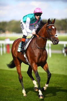 Looking for best advisor Horse Racing Tips? Not to worry Horseday Racing is always here to help you. We will guide you for every horse betting. Dressage, Thoroughbred Horse, Clydesdale Horses, Breyer Horses, Pretty Horses, Horse Love, Beautiful Horses, Horse Betting, Horse Racing Tips