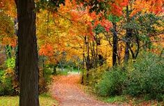 Image result for autumn weather scenes