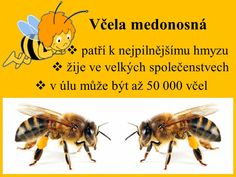 Bugs, Insects, Montessori, Animals, Bees, Animales, Animaux, Beetles, Animal