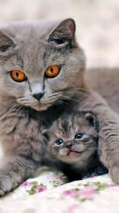Maman ! Pipi ! If you're a Cat Lovers, check out this Cats collection, you may like it :) Here's link ==> https://www.sunfrog.com/tuanldshirt/cats #cats #ilovecats
