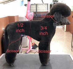Dog Grooming Styles, Dog Grooming Salons, Dog Grooming Tips, Poodle Grooming, Dog Grooming Business, Poodle Cuts, Creative Grooming, Dog Haircuts, Yorky